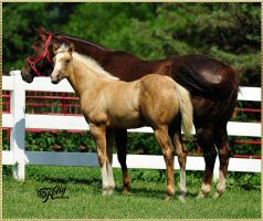 YELLOWweanColt_withDam_HOF8425.jpg